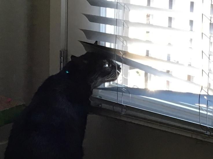 Cat Looks